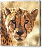 Cheetah One Acrylic Print