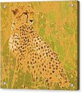 Cheetah Acrylic Print