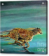 Cheetah Run Acrylic Print