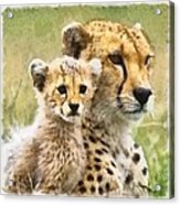 Cheetah Two Acrylic Print