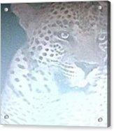 Cheetah Visits The Camp At Night Acrylic Print