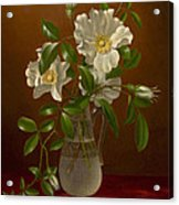 Cherokee Roses In A Glass Vase C1883-1888 Acrylic Print