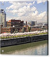 Cherry Blossom Along Portland Oregon Waterfront Panorama Acrylic Print