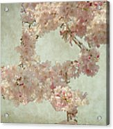 Cherry Blossom Bridal Bouquet Acrylic Print
