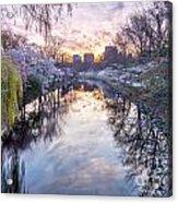 Cherry Blossom Lagoon Acrylic Print