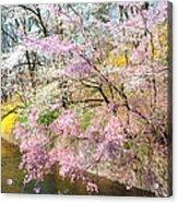 Cherry Blossom Land Acrylic Print
