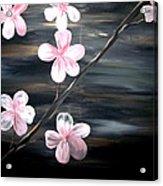 Cherry Blossom  Acrylic Print by Mark Moore