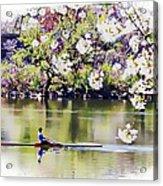 Cherry Blossom Rower Acrylic Print