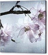 Cherry Blossom Sweetness Acrylic Print