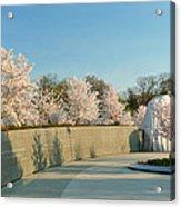 Cherry Blossoms 2013 - 022 Acrylic Print