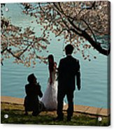 Cherry Blossoms 2013 - 054 Acrylic Print
