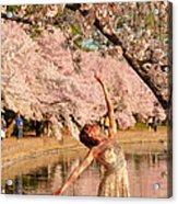 Cherry Blossoms 2013 - 077 Acrylic Print