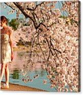 Cherry Blossoms 2013 - 079 Acrylic Print