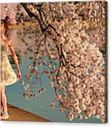Cherry Blossoms 2013 - 082 Acrylic Print by Metro DC Photography