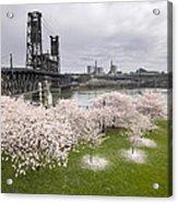 Cherry Blossoms Along Willamette River Acrylic Print