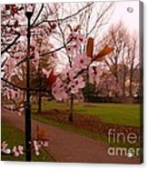 Cherry Blossoms At Kirkland In Kendal Acrylic Print