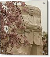 Cherry Blossoms At The Martin Luther King Jr Memorial Acrylic Print