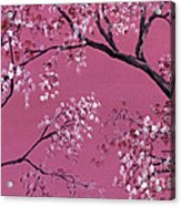 Cherry Blossoms  Acrylic Print by Darice Machel McGuire