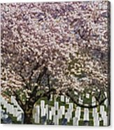 Cherry Blossoms Grace Arlington National Cemetery Acrylic Print by Susan Candelario