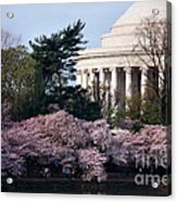 Cherry Blossoms Jefferson Memorial Acrylic Print