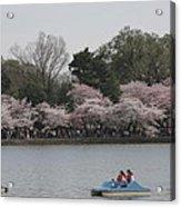 Cherry Blossoms - Washington Dc - 011315 Acrylic Print by DC Photographer