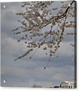 Cherry Blossoms With Jefferson Memorial - Washington Dc - 011312 Acrylic Print by DC Photographer