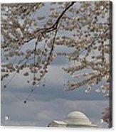 Cherry Blossoms With Jefferson Memorial - Washington Dc - 011313 Acrylic Print
