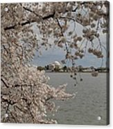 Cherry Blossoms With Jefferson Memorial - Washington Dc - 011320 Acrylic Print by DC Photographer