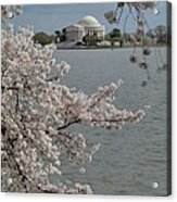 Cherry Blossoms With Jefferson Memorial - Washington Dc - 011321 Acrylic Print by DC Photographer