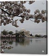 Cherry Blossoms With Jefferson Memorial - Washington Dc - 011343 Acrylic Print