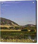 Cherry Creek Pond Cattails Acrylic Print