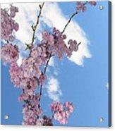 Cherry Floral Fountain Acrylic Print