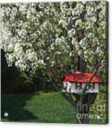Cherry Home Acrylic Print