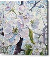 Cherry In Blossom Acrylic Print by Andrei Attila Mezei