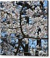 Cherry Lane Series  Picture B Acrylic Print