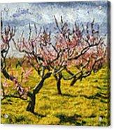Cherry Trees 3.0 Acrylic Print
