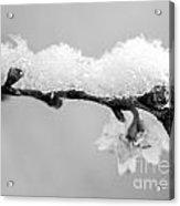 Cherryblossom With Snow Acrylic Print