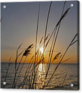 Chesapeak Bay At Sunrise Acrylic Print