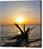 Chesapeake Bay Driftwood At Sunset Acrylic Print