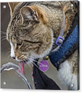 Chester At The Drinking Fountain Acrylic Print
