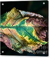 Chestnut Autumn Mosaic Acrylic Print