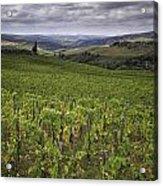 Chianti Region Of Tuscany Acrylic Print