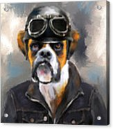 Chic Boxer Aviator Acrylic Print by Jai Johnson