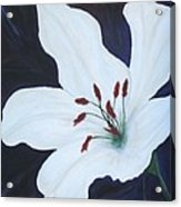 Chicago Snow White Lusterlily Acrylic Print