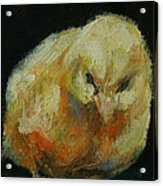 Chick 02 Acrylic Print