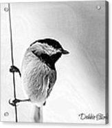 Chick Chick Acrylic Print by Debbie Sikes