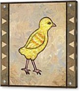 Chick One Acrylic Print