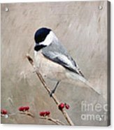 Chickadee And Berries Acrylic Print