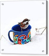 Chickadee And Tin Cup In Snow Acrylic Print