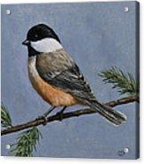 Chickadee Charm Acrylic Print by Crista Forest